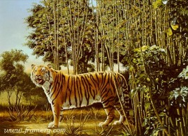 THE HIDDEN TIGER by D. L. Rust The Hidden Tiger hides in plain sight. In stock and available Current price - $150 Special $90